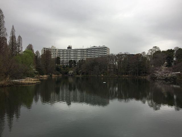 井之頭公園 池