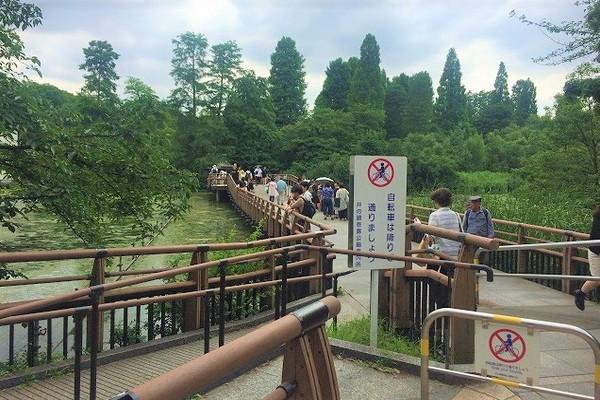 井の頭公園内の池に架かる橋