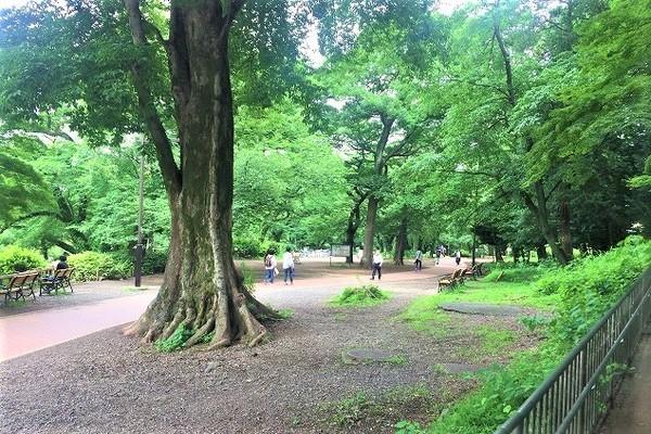 園内はこんな感じで緑たっぷりです